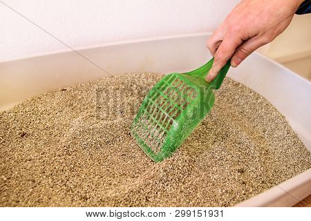 poster of Cleaning Cat Litter Box. Hand Is Cleaning Of Cat Litter Box With Green Spatula. Toilet Cat Cleaning