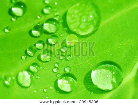 Water drops on green Leaf (shallow Dof)