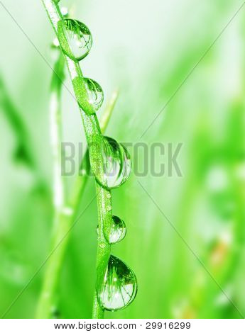 water droplets on green grass; Series A1