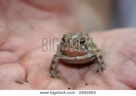 Edisto Island Tiny Frog