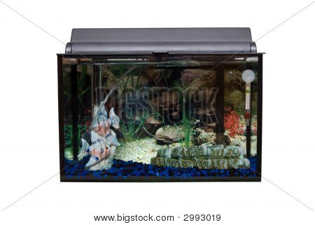 Isolated Fishtank