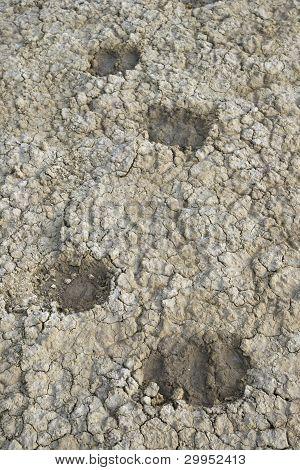 Sheep Tracks