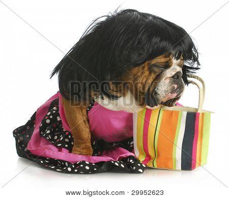 female dog - english bulldog wearing wig and dress sitting beside purse