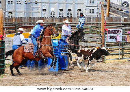 BOULDER - AUGUST 27th: unidentified cowboys in calf roping competition at Jefferson County Fair and Rodeo on august 27, 2011 in Boulder, Montana