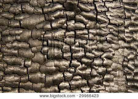 Background of burnt bark