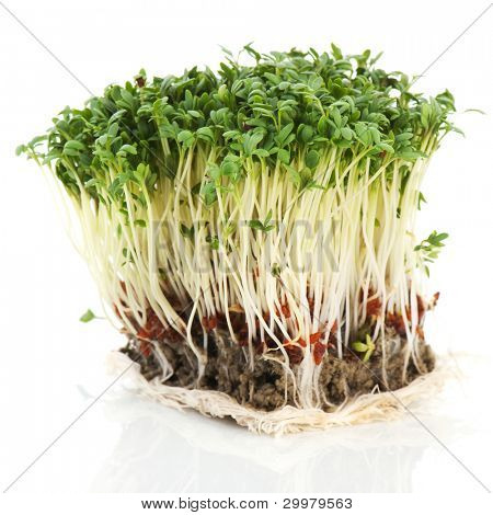 clod fresh garden cress isolated over white