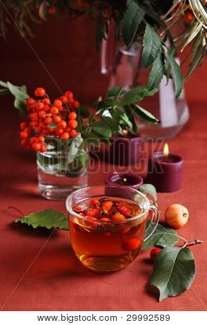 Herbal tea with autumn berry- lifestyle
