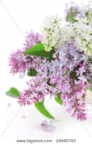 Bouquet of lilac on a white isolated background.