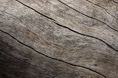 Weathered Wooden Texture Closeup Photo. Aged Timber With Weathered Cracks. Natural Background For Vi poster