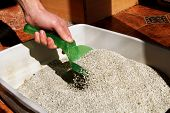 Cleaning Cat Litter Box. Hand Is Cleaning Of Cat Litter Box With Green Spatula. Toilet Cat Cleaning  poster