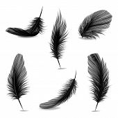 Vector 3d Realistic Different Falling Black Fluffy Twirled Feather Set Closeup Isolated On White Bac poster