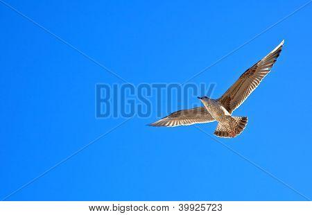 mar gaivota voando