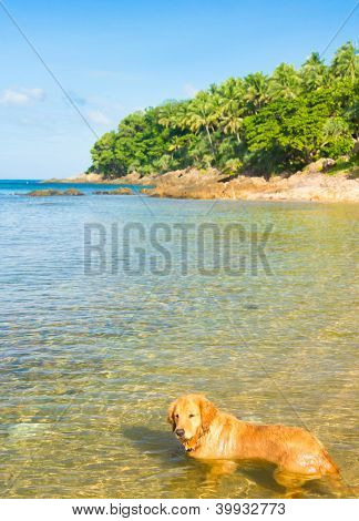 My Friend On a Beach