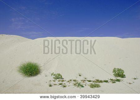 Arid Landscape With Bushes