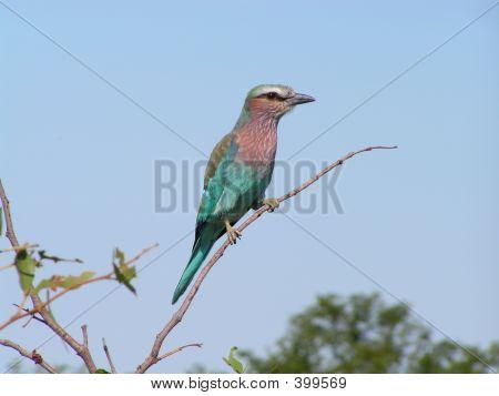 Bird In Botswana