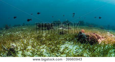 green grass sea scape