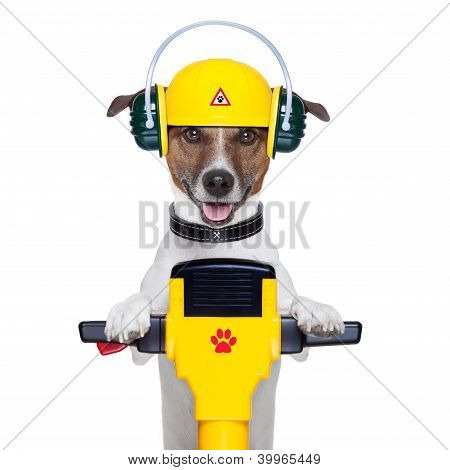 Handyman Dog Worker