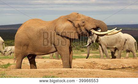 Bebendo o elefante