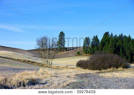 Rural Idaho Palouse.
