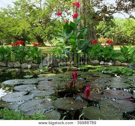 Lotuses in a pond