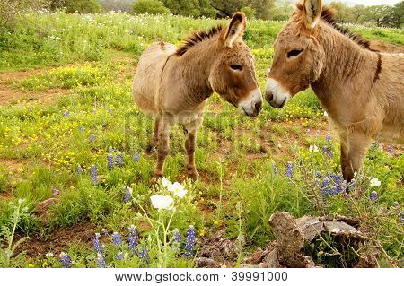 Cute Donkey Love