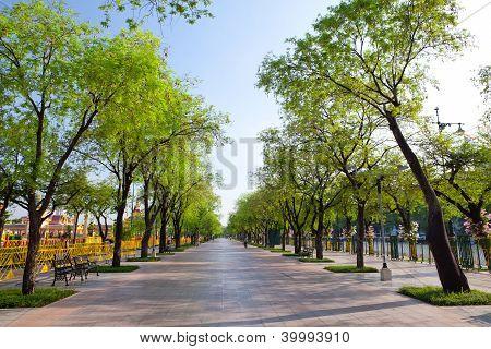 Way side Trees
