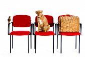 Waitingroom Veterinary poster