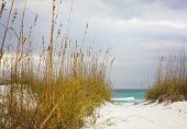 foto of sea oats  - Sandy Path leads through the dunes to beautiful turquoise beach in Florida - JPG