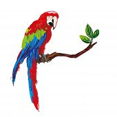 stock photo of parrots  - colorful parrot isolated in white background vector illustration - JPG