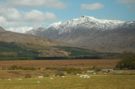 stock photo of carron  - Rural landscape in the Highlands of Scotland near Loch Carron. Sgorr Ruadh in the background.  - JPG