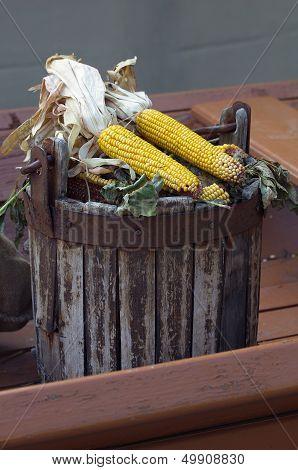 Corn ears in wooden bucket