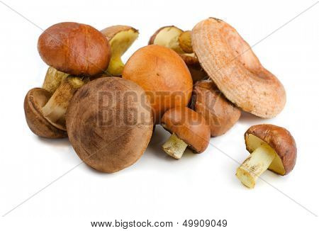 Various wild forest mushrooms isolated on white