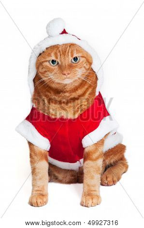 Fat Cat In Santa Suit