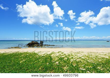 Blue sea and subtropical plants of Okinawa