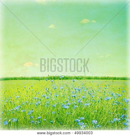 Blaue Kornblumen im Weizenfeld. Vintage-Stil-Foto.