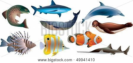 Fishes And Marine Life