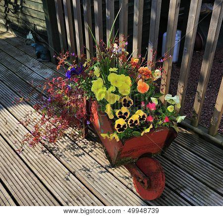 Wooden Wheel-barrow Full Of Flowers.