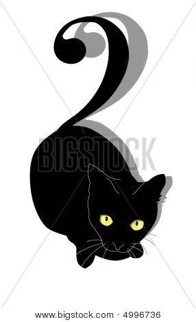 A Black Cat