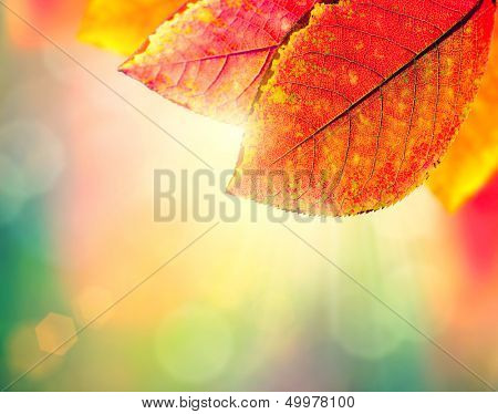 Autumn Background. Beauty Colorful Leaves and Sun Light. Fall. Yellow, Orange, Red and Green Colors. Colorful Abstract Nature Background