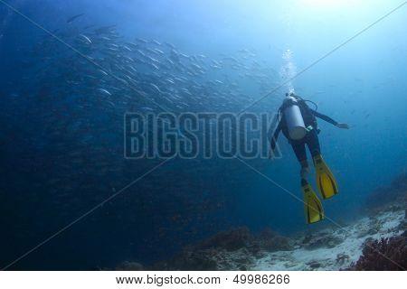 Scuba diver watching huge school of Jack fish swirling underwater