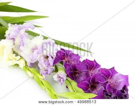 Schöne Gladiolen Blume isoliert auf weiss