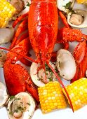 stock photo of clam  - Delicious boiled lobster dinner with clams - JPG