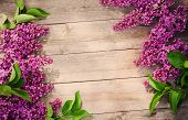 picture of lilac bush  - The beautiful lilac on a wooden background - JPG