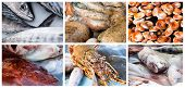 stock photo of redfish  - Collage of raw seafood - JPG