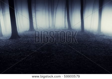 Dark creepy forest with fog on halloween