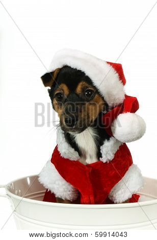 Puppy At Christmas