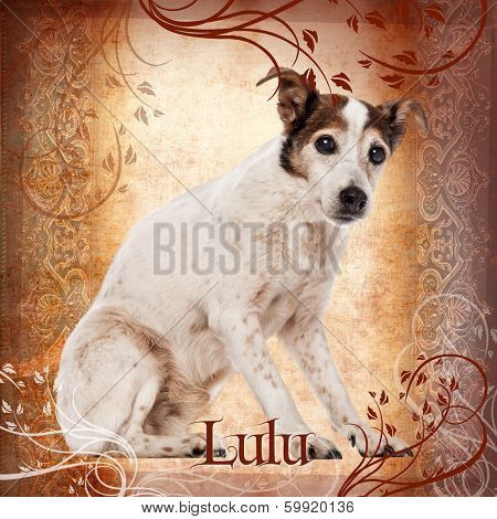 Old Jack Russell Terrier sitting, 17 years old, on a designed background
