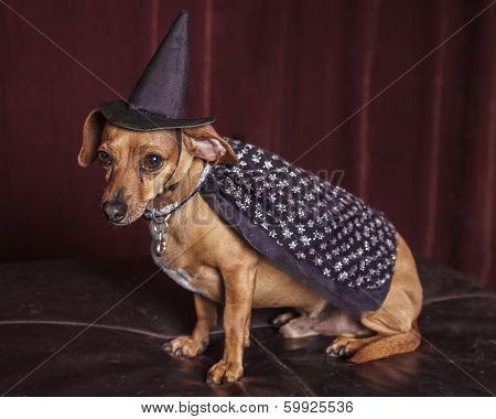Cute Witch Dog