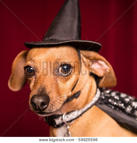 Cute Witch Dog