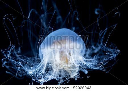 Abstract Jelly Fish